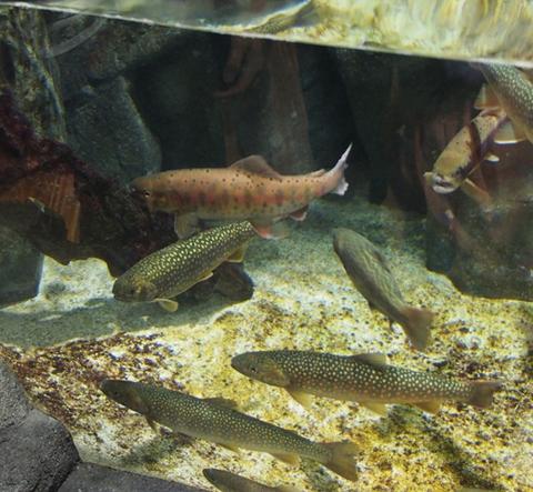 加茂水族館