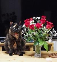薔薇とネコ
