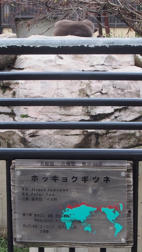 旭山動物園01