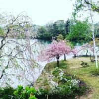 桜ヶ丘 アイスコリン