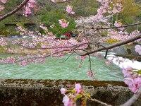 桜ラリー 2018/04/18 15:24:47