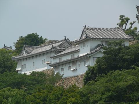 広く大きな家