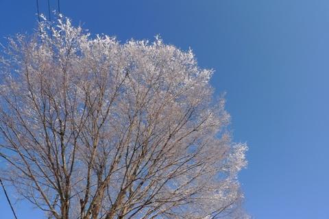 ワルシャワの雪