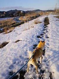 柴男の散歩