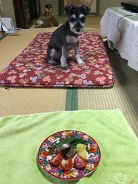 豪華食事U^ェ^U ワン!