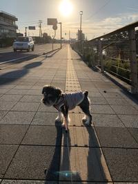 清々しい散歩Uo・ェ-oU/^☆ ウフッ♪