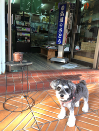 今日はお店開けますよ〜〜(✿✪‿✪。)ノ