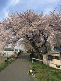 お散歩U^ェ^U ワン!