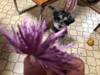 たくさんもらった菊を狙うUo・ェ-oU/^☆ ウフッ♪