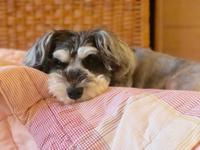 涼しい朝の犬パンチヘU・x・U ワン♪