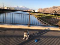 桜とナツUo-ェ-oU ポッ♪