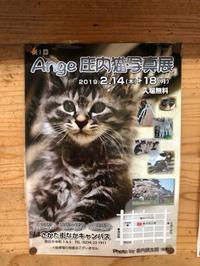 猫好きにはたまらない写真展が近々あります(=^x^=)