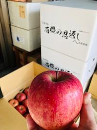 ★りんごお買い得情報★