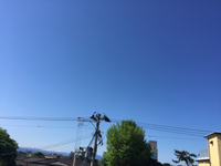 定休日の朝(*゚▽゚*)