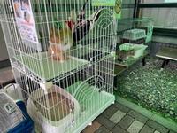 猫の里親会in三川のいろりびの里(*゚▽゚*)