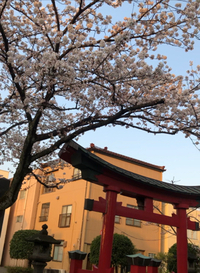 愛宕神社は花盛り〜.:*・✿ ✿.。.:*・ヾ(Ő‿Ő✿)✫゚*