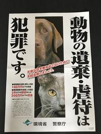 捨て猫は犯罪です