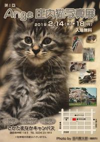 第1回 Ange庄内猫写真展