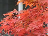 鶴岡、紅葉盛り