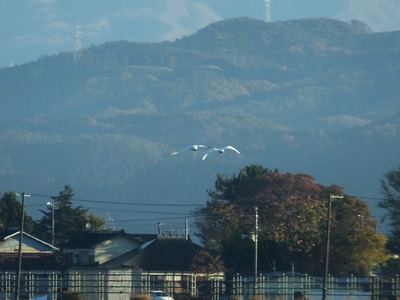 朝の鳥海山