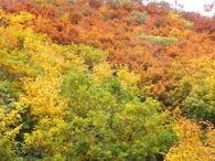 鳥海山「紅葉三昧」