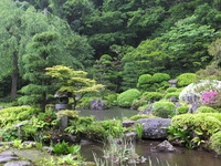 新緑の玉川寺