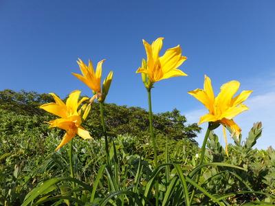 お花と青空
