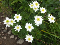 夏山の花たち