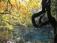 秋の「丸池様」