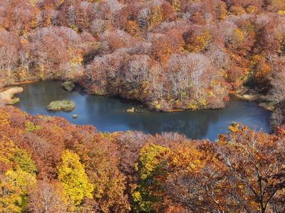 晩秋の「鶴間池」