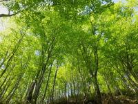 鶴間池新緑