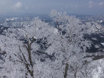 春の摩耶山