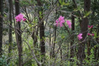 「火打岳」のお花
