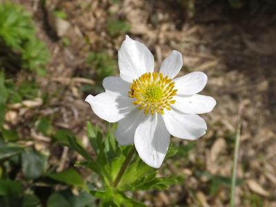 以東岳のお花