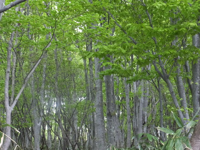 鶴間池、緑を満喫。