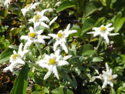 月山の花々(最終回)
