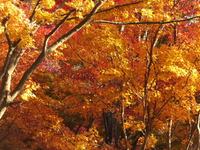 眺海の森の紅葉