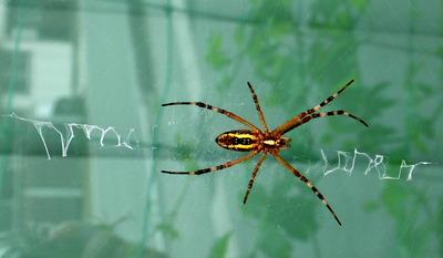 文字を書く蜘蛛
