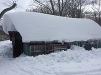 鳥海山、「山雪荘」