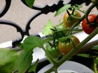ミニトマトとか色々