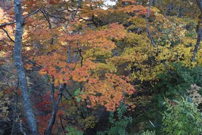 紅葉を見に鳴子峡へ