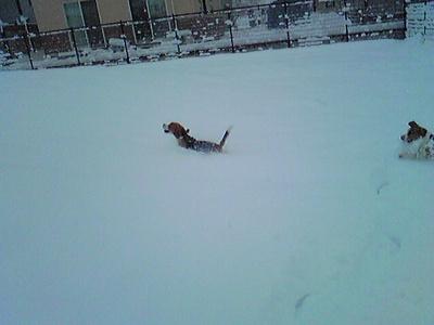 初雪遊び♪