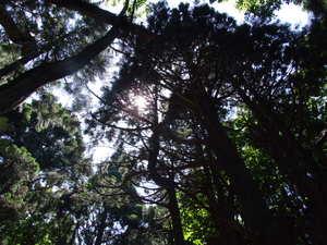 幻想の森、夏