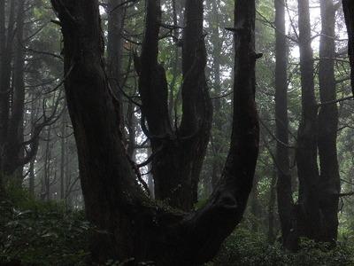 「幻想の森」再訪