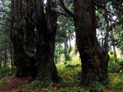 「幻想の森」