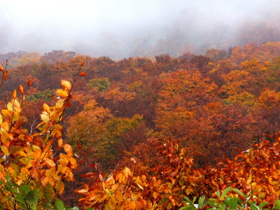 鳥海山の紅葉