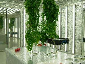 植物工場デモ