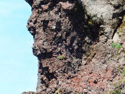 鳥海山の動物たち