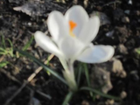 春は麓より
