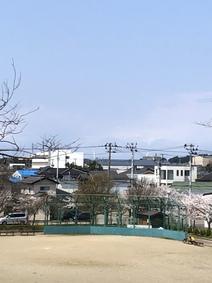 桜が綺麗です♪